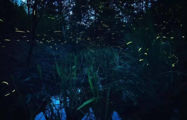 走,看萤火虫去!莫干山下,这片会发光的森林太梦幻了!