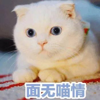 超可爱的喵星人表情包给超可爱的你!图片