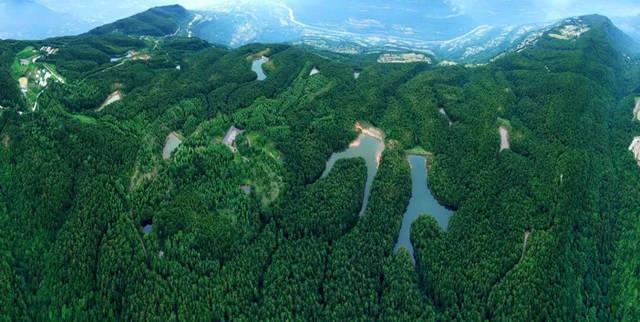 苍溪县三川镇境内,海拔1337米,为苍溪县的最高峰,九龙山有森林面积图片