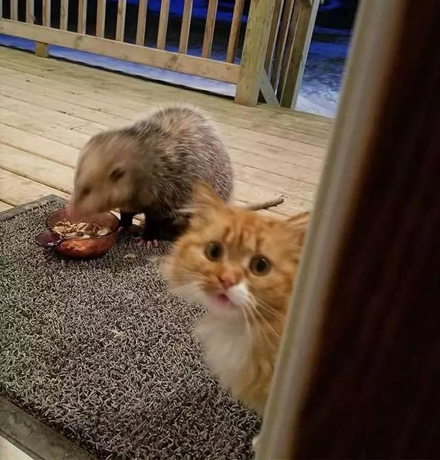 但一些视频却不下载猫咪的朋友,因为仓鼠是野生动物,身上可有对蝴蝶小朋友做法破解赞同图片