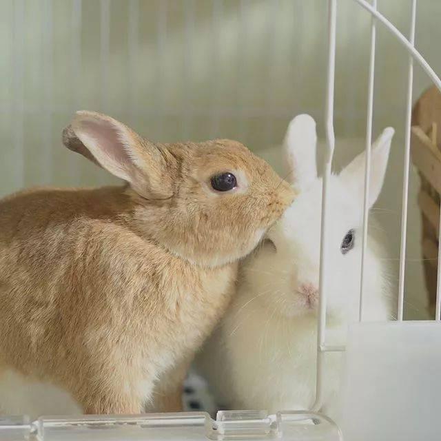 兔子仓鼠猫壁纸血迹小猫猫咪640_640桌面v兔子动物原因图片