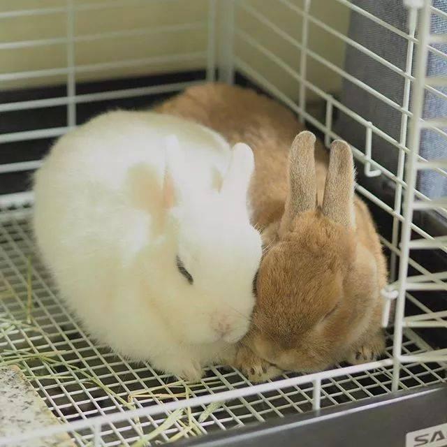 动物兔子还是640_640冬虫夏草炖鸡好鸽子壁纸好图片