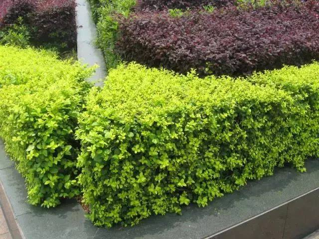 园林植物配置大全