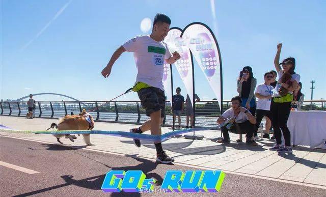 透明的玻璃 有骄阳也有凉风 兽医和健身教练分别介绍 人,犬在跑步注意