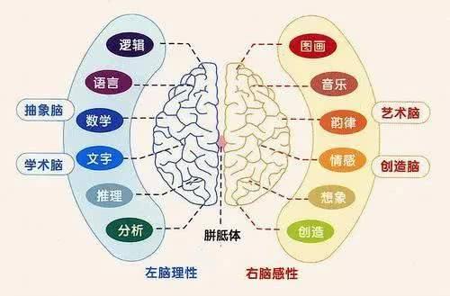 大脑开发的七大优势!图片