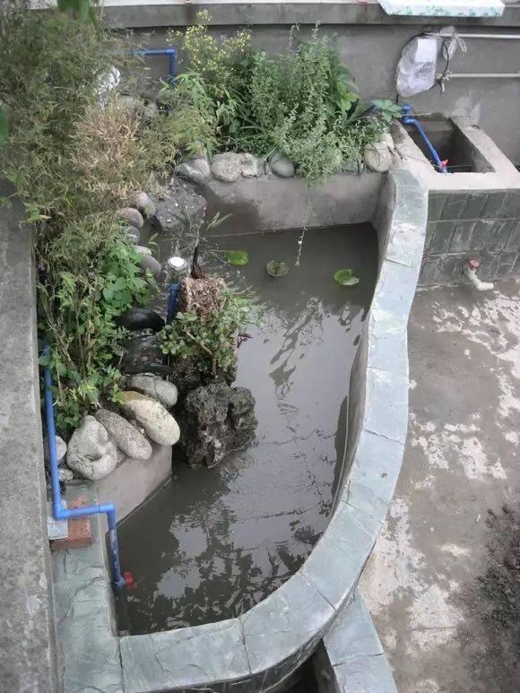 做好记录:2013年5月21日,鱼池泡水17天,溢流池出青苔, 主池池底开始图片