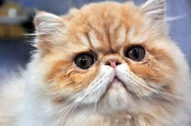 萌宠头像表情一定要开心,因为头像就是我们自己,皱着眉头的猫带来的就