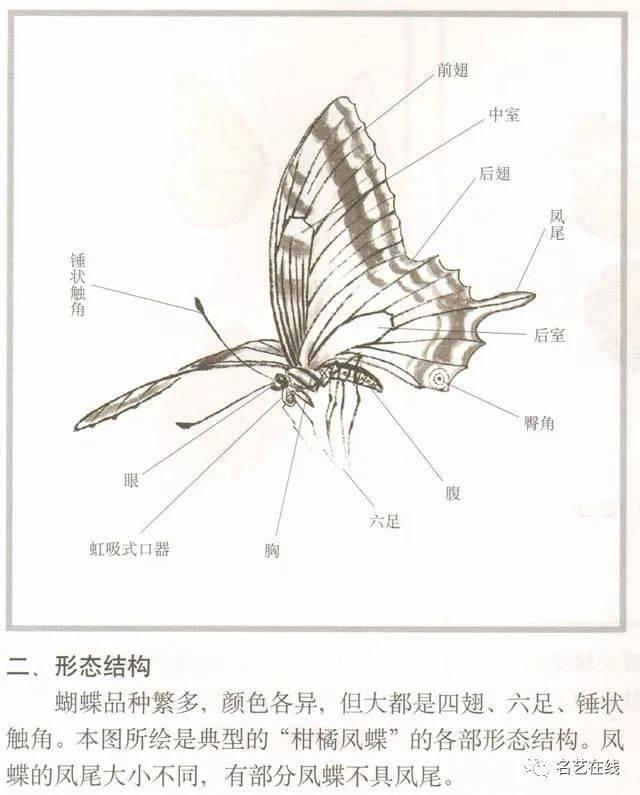 国画技法 | 蝴蝶的工笔及写意画法(附古画蝴蝶画高清欣赏)