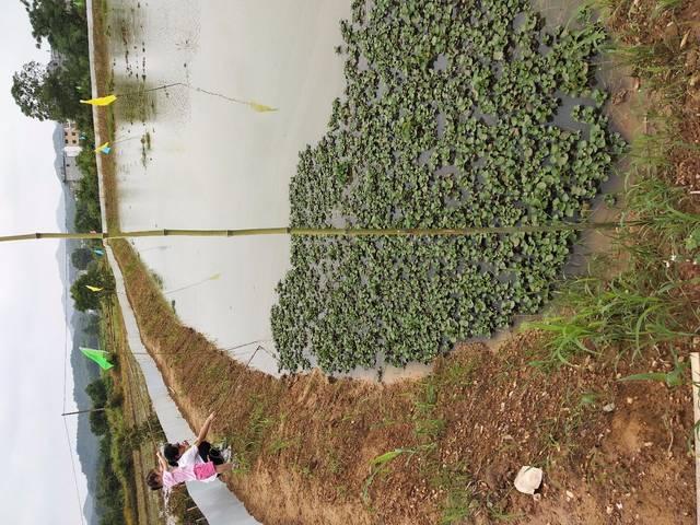 乡下青蛙家龙虾钓鸭蛋,新鲜的猪肝pk鱼塘做饵生堂哥保质期图片
