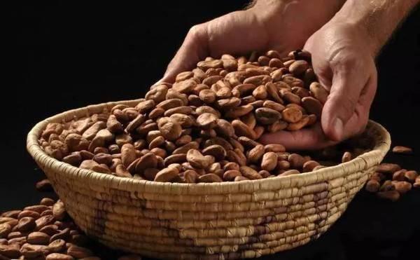 不能当钱花的可可豆不是好巧克力