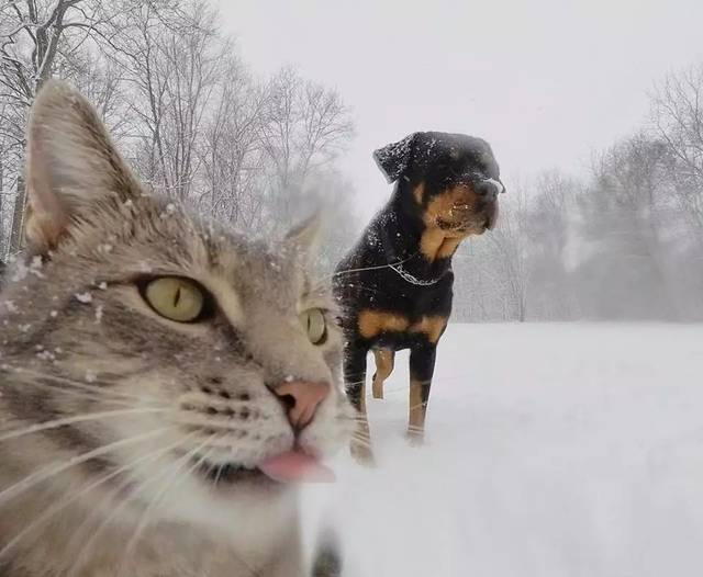 拜猫网_当猫学会了自拍,人类都要甘拜下风