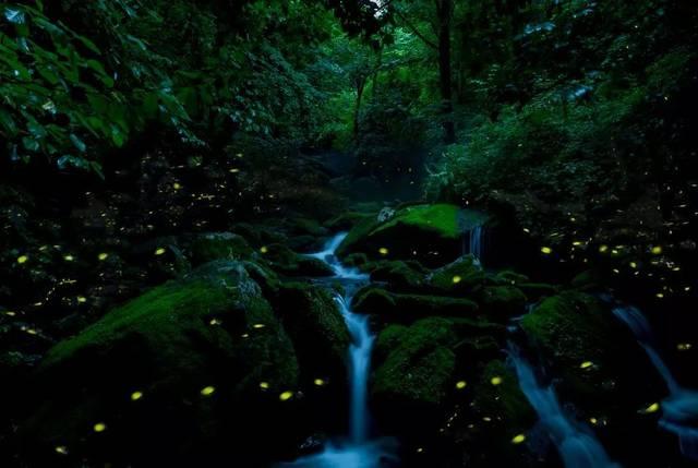 天台山萤火虫的种类近20个品种,据说是目前亚洲最大的萤火虫观赏基地