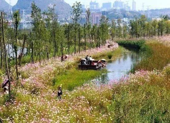 5m,植物配置时主要考虑湿地净化污水作用和自净能力,常采用沉水植物