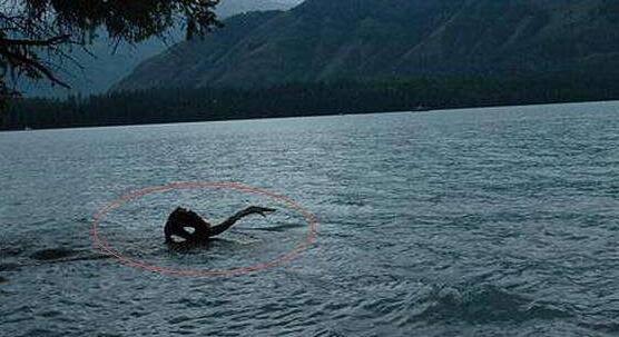 巨型哲罗鲑鱼,传说中的喀纳斯湖水怪