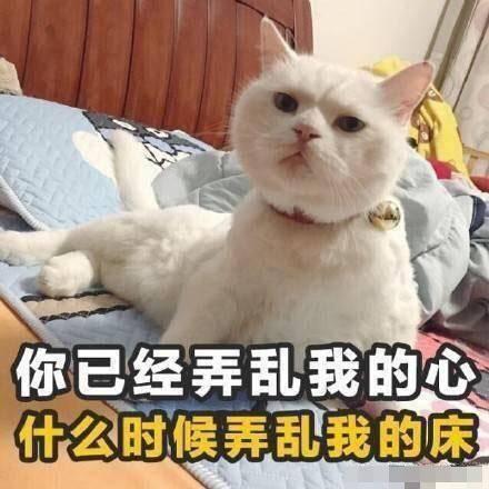 猫咪表情包带字囹 a_猫咪生气带字表情包_猫咪