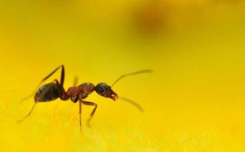 被蚂蚁咬伤身亡 被蚂蚁咬了怎么办