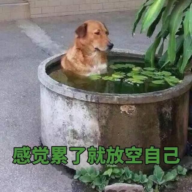 斗图日常:做狗呢,最重要的是开心图片