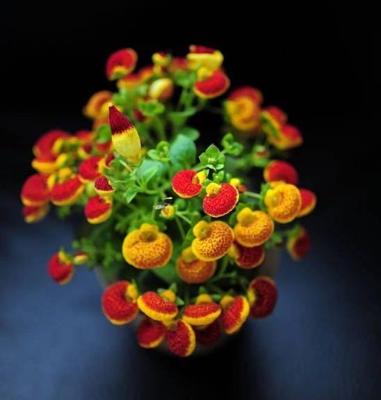 花的叠法大全步骤图解