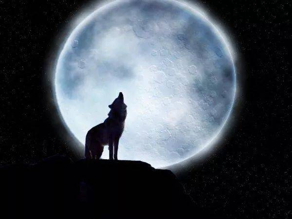sex日本囹�a_锲而不舍,独自闯荡, 狼在年轻的时候会独自出去打拼, 孤狼在失去了