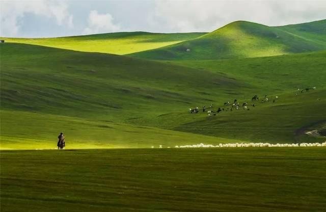 这个夏天走起来,一起去青青草原抓羊啊