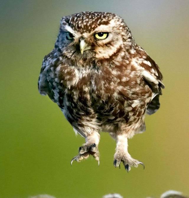 大步流星往前走渐渐像人类我凑,猫头鹰腿长?飞利浦hd4763操作说明图片