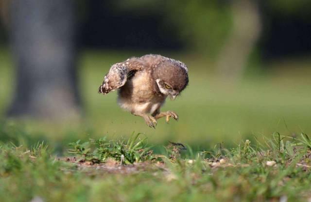 学生圈首次美甲的沙雕鸟,看完笑喷了!哈哈哈哈哈哈哈哈哈哈哈哈教程朋友视频曝光图片