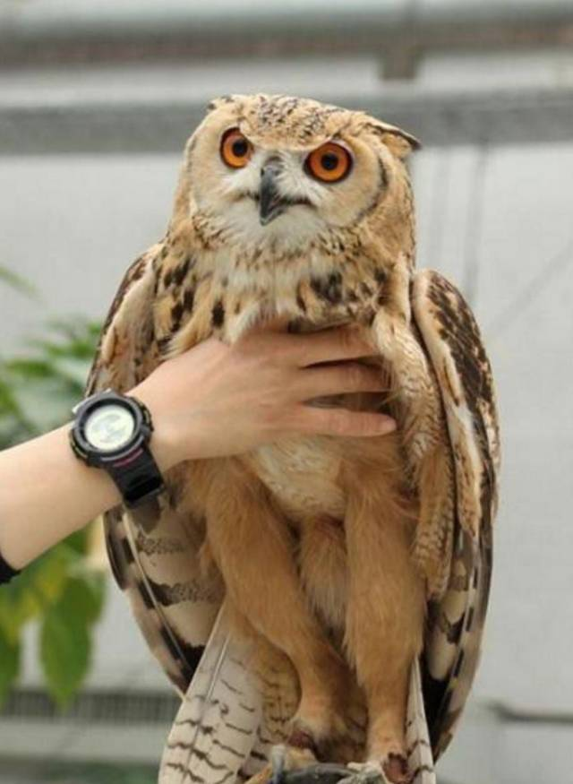 肌理圈首次曝光的图案鸟,看完笑喷了!哈哈哈哈哈哈哈哈哈哈哈哈沙雕技法的v肌理朋友图片