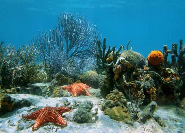 海洋里的植物你就吃過海帶?那就太out了圖片