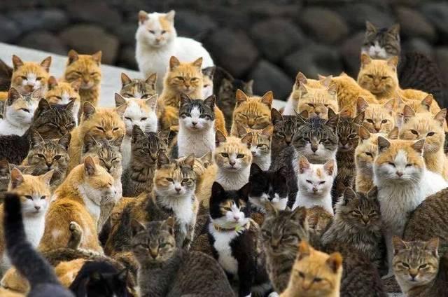 猫咪视频_岛上的人不多 却有 上百只猫咪 真是名副其实的猫咪圣地 先黎睇个视频