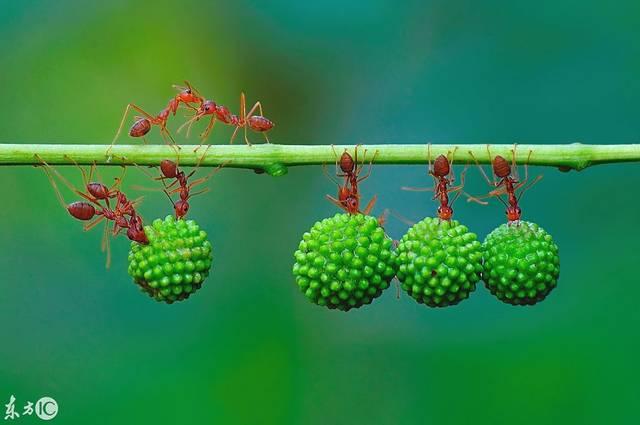 高难度!杂技搬食堪比海豚v杂技花园绘本蚂蚁一共多少辑图片