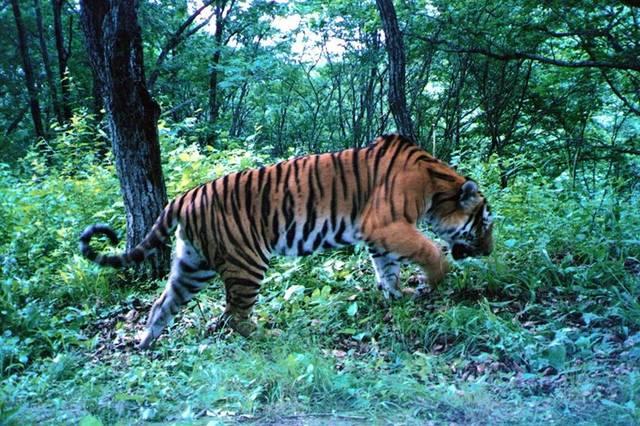 张建龙到东北虎豹国家公园管理局调研,强调坚持问题导向图片