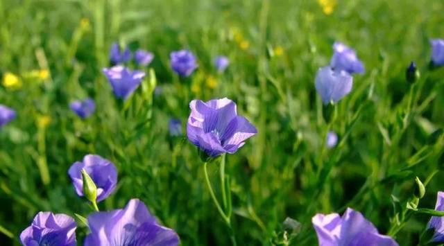 《春天的小花》 作者:谭旭东 春天的小花 开在花圃里 花圃里像点着了 朵朵彩色的火花 春天的小花 开在阳台上 阳台上像挂上了 一幅幅彩色的图画 春天的小花 开在山野里 山野里像长出了 许多彩色的喇叭 春天的小花 伸着绿色的小手 张开彩色的小嘴巴 像是许多小朋友 在一起聊天说话 暑假诗歌 请与我们联系 15098238277