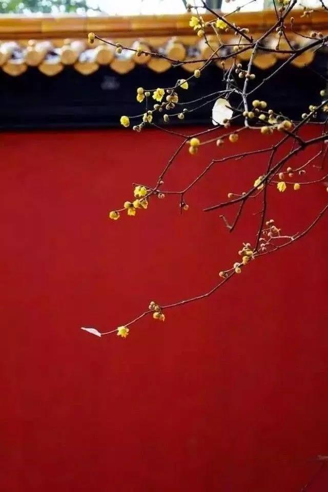 【人文】中国红,千年流传的极致惊艳!