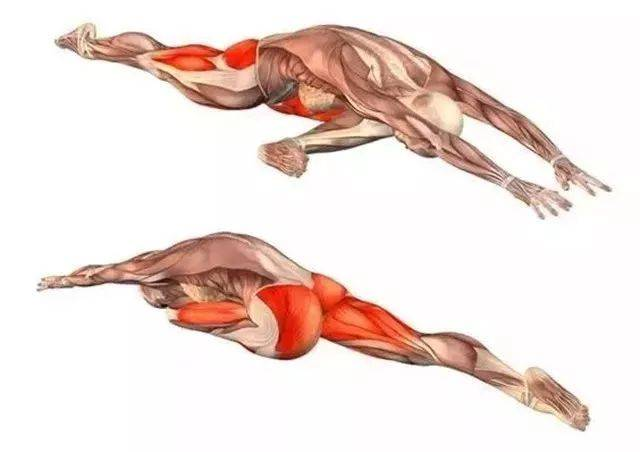 20个经典瑜伽体式解剖图,告诉你什么动作锻炼哪里!(收藏)图片