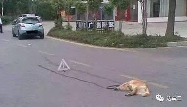 一锤定音:开车撞到狗能让保险理赔吗? 搜狐汽车 搜狐网