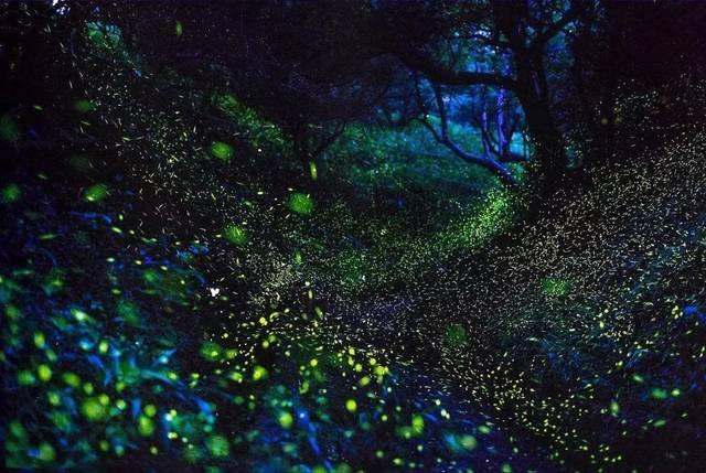 天台山萤火虫观赏期:4-10月份,赏萤最佳时间在傍晚19-22点!