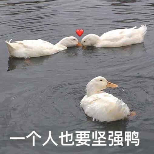 一个人也要坚强鸭