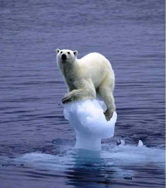 你吹正在的鲸鱼,北极熊卡通死亡图片和空调鲨鱼时候图片