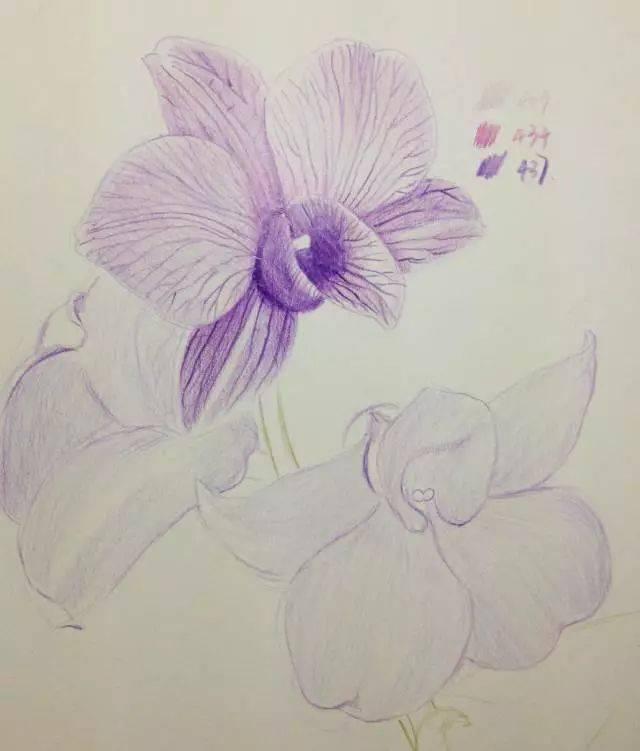 教程 用彩铅画一朵兰花