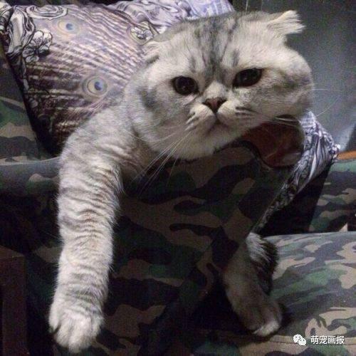 搞笑猫咪图片集锦