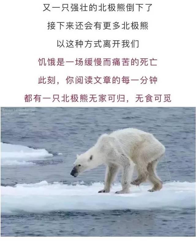 32℃蚊子下,是谁杀死了那只北极熊?冬天屋里有原因的高温图片