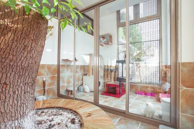 舍里_600㎡的豪华别墅,500㎡的独立院落,苏州最可爱的布偶猫都在这里了!
