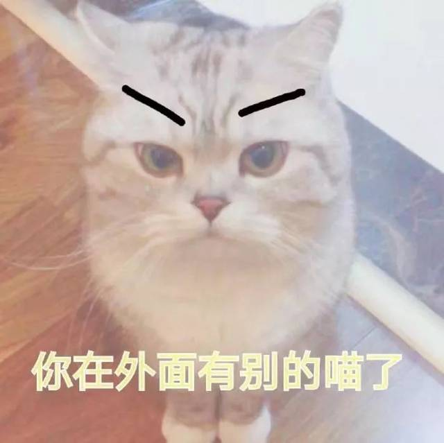 壁纸/头像   超可爱搞笑猫咪表情包
