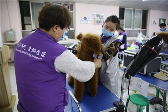薪酬:刚毕业的宠物美容师工资一般有多少?