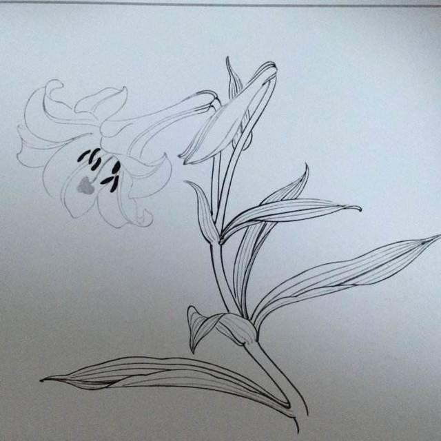 简笔画 手绘 素描 线稿 640_640图片