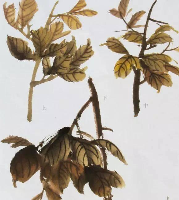 【国画知识】国画牡丹叶子和枝干的画法,简单易学!图片
