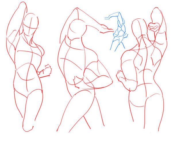 【经验】人的身体怎么画|人物的身体的简单画法-动漫