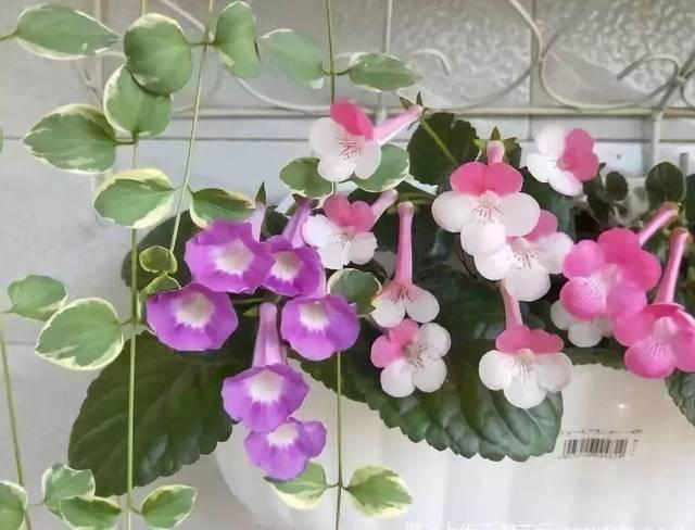 客厅假花仿真花