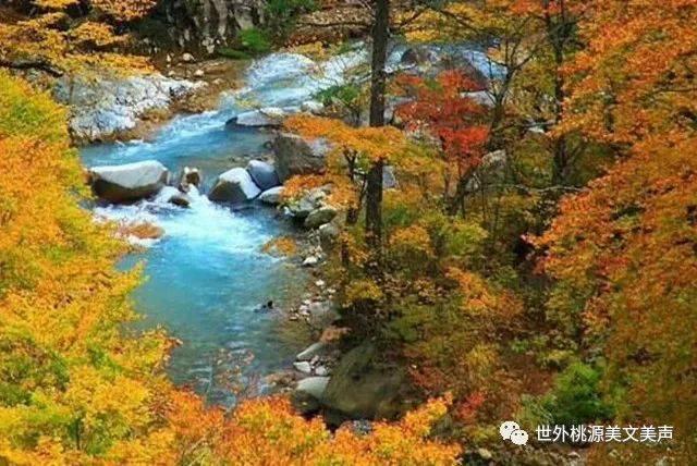 秋天秋雨秋风凉, 秋季秋叶秋草黄.