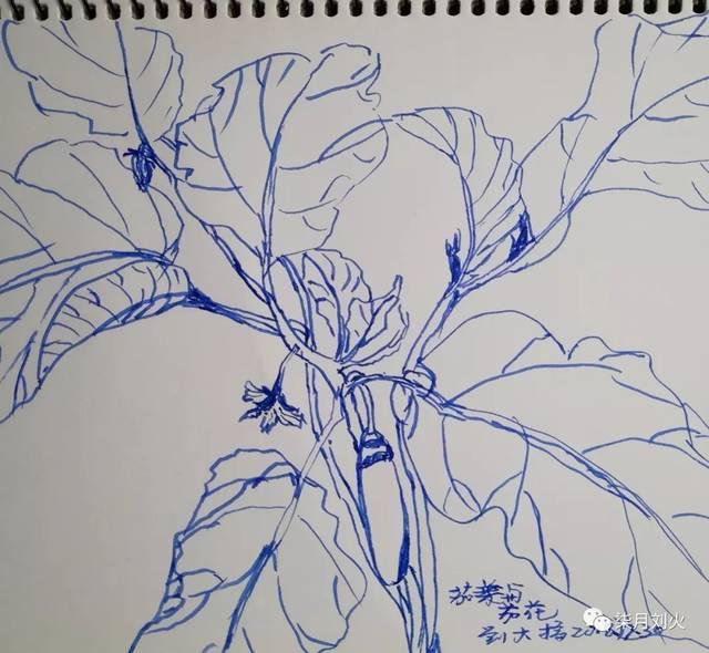 刘火钢笔:乡间植物